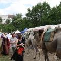 ortenburg09_294